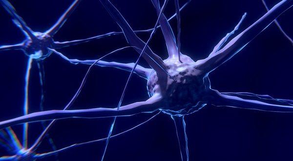 زراعة الخلايا العصبية تنهي أمراض الدماغ – آفاق علمية وتربوية